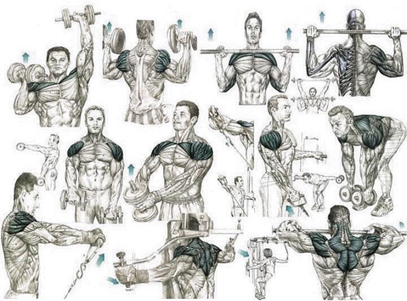 Лучшие упражнения на плечи