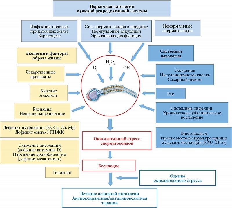 Факторы влияющие на мужское бесплодие