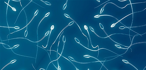 Улучшить спермограмму у мужчин